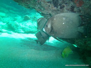 Nurse Shark Reef
