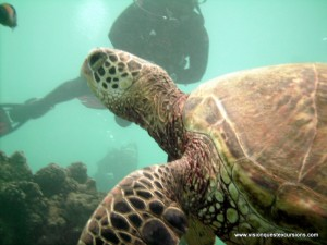 Sea Turtle Watching Divers